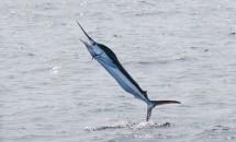 次期Google Nexus『Marlin』のスペック情報がリーク