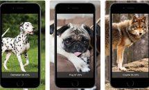 通常360円のカメラで犬を識別『犬種判別-Dog Identify』や500円の『詰将棋』などiOSアプリ値下げ中 2018/12/17