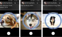 通常130円が0円に、画像から見分ける『犬の品種を特定する』などAndroidアプリ値下げセール 2019/10/20