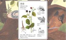 通常650円が0円に、160種の動植物を知るゲーム『鼠ちゃんの百科事典』などAndroidアプリ値下げセール 2020/3/19