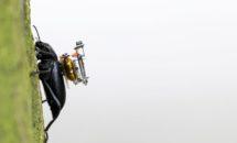 カブトムシ用GoProが誕生、昆虫目線の世界へ
